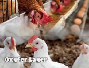 oxyfer layer kanatlılarda kansızlık