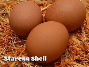 yumurta kabuğu kalitesi