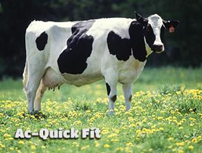 ac quick fit buzağılama sonrası ineğin ilk ihtiyacı